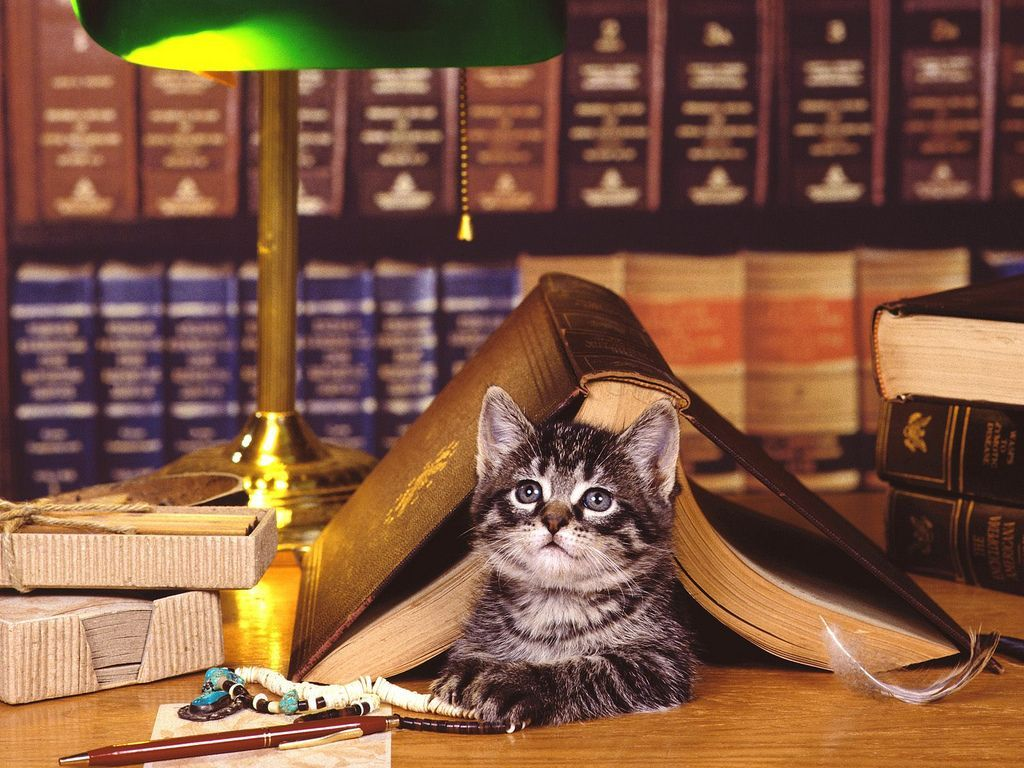 Cat_with_Bankers_Lamp.jpg