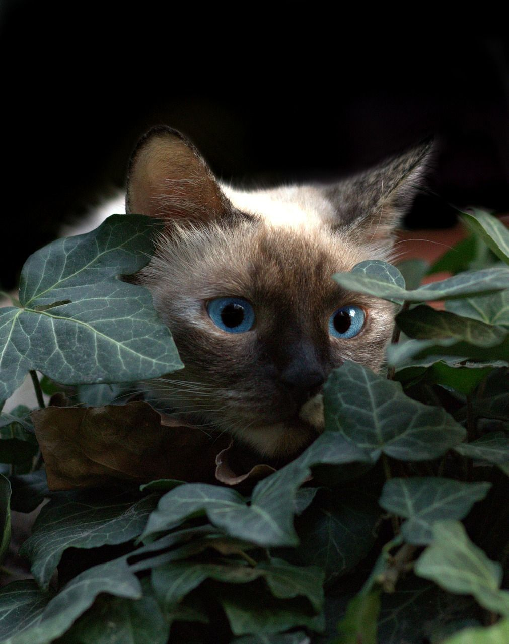 cat-2764899_1280.jpg
