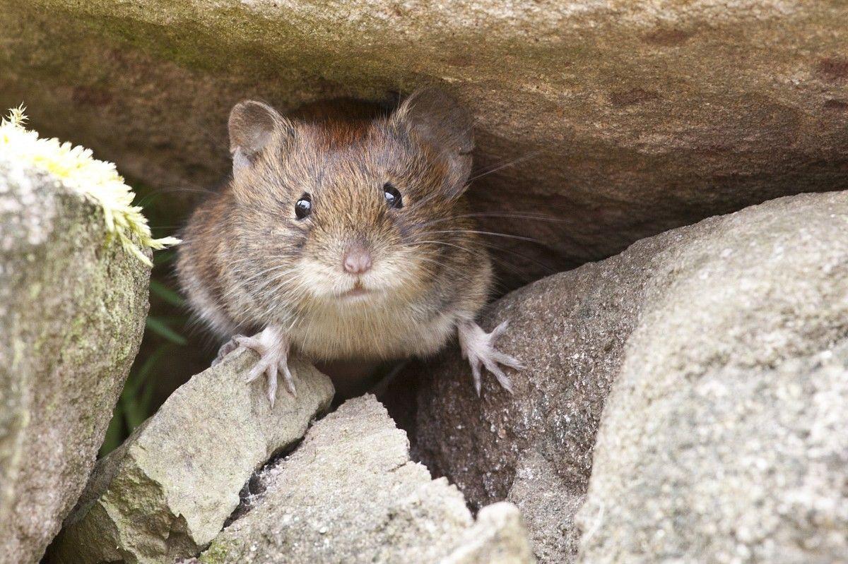 mouse_nature_button_eyes-1283058.jpg!d.jpeg