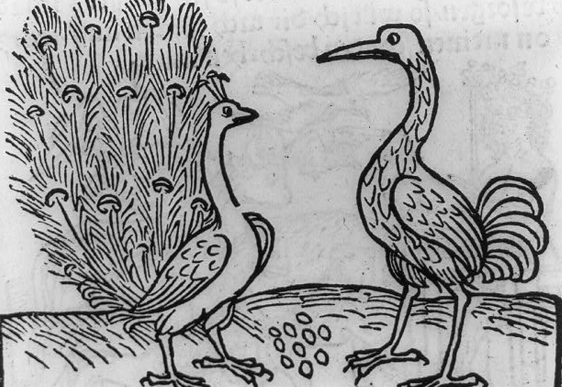 1. Aesop's fable of the crane and the peacock.png