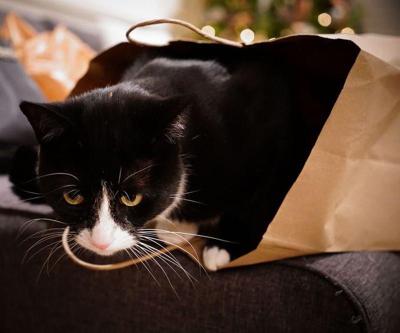 Cat_Bag